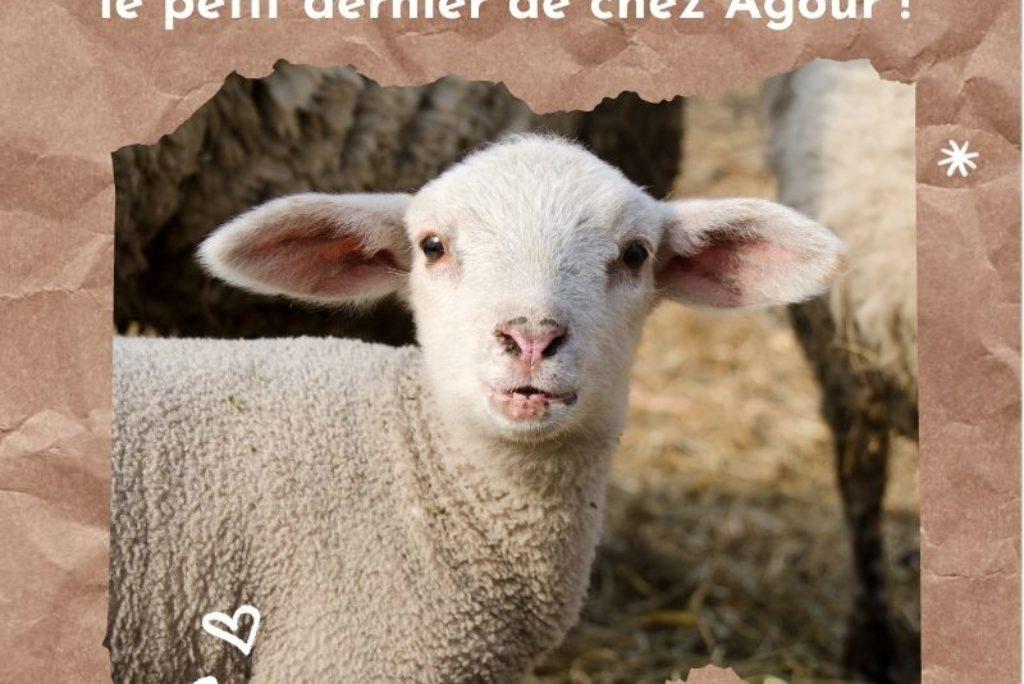 le dernier né de la maison Agour : Urdina !