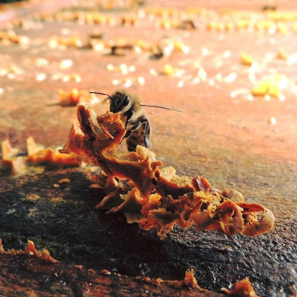 Loreztia : miels et confitures artisanales